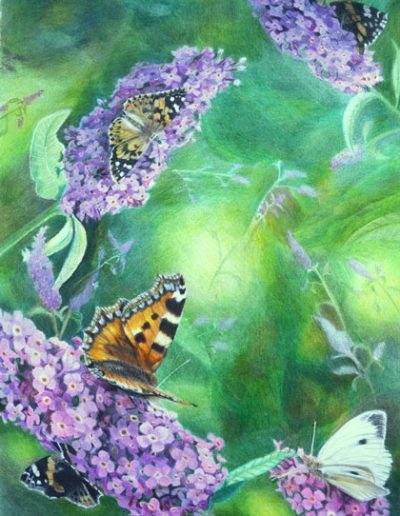 Butterfly-A3-bristol-smooth-cardstock,-prismacolor-pencils