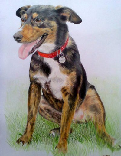 Mixed-breed-dog-drawing-A3-bristol-smooth-card,-prismacolor-pencils