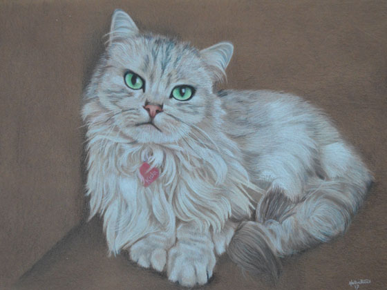 Siberian-cat-drawing-A3-colored-cardstock-prismacolor-pencils