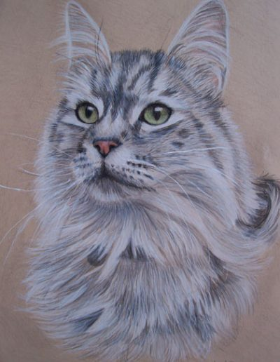 cat-drawing,-coloured-cardstock,-prismacolor-pencils
