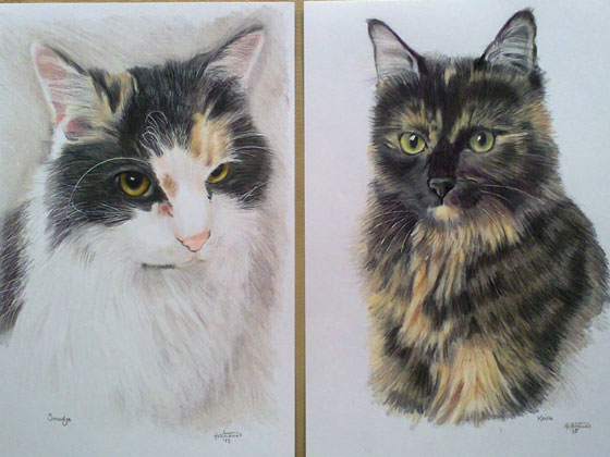 cat-drawings-A4-bristol-smooth-card,-prismacolor-pencils