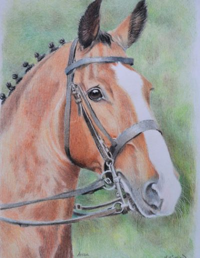 horse-drawing,-A4-bristol-smooth-card,-prismacolor-pencils